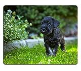 luxlady Mousepads-Figura de perro Schnauzer miniatura Perro en una Verde