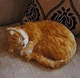 Gizmo | realista Dormir Vida Tamaño Ginger & gato blanco