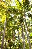 Impresión de Arte Fino en lienzo: Tropical Oasis I by