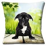 "Blanco Negro lindo Brindle Bulldog Francés cachorro-16""(40cm) almohada cojín"