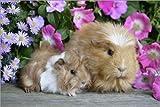 Impresión en madera 130 x 90 cm: Two guinea pigs