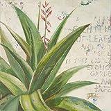 Impresión de Arte Fino en lienzo: Aloe II by Pinto,