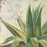 Impresión de Arte Fino en lienzo: Aloe I by Pinto,