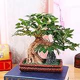 Rts Simulación planta bonsai living comedor hogar jardín decoración adornos
