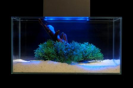 Amazon Com Fluval Edge 6 Gallon Aquarium With 21 Led