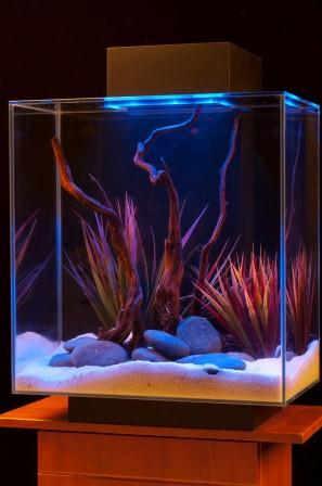Amazon Com Fluval Edge 12 Gallon Aquarium With 42 Led