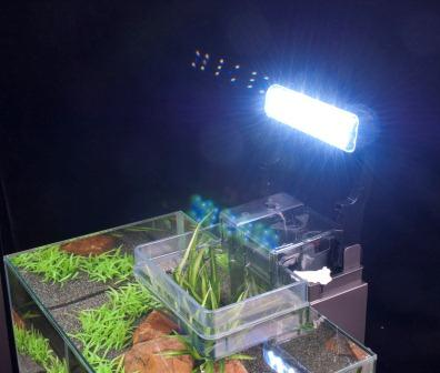 Lighting and filtration system
