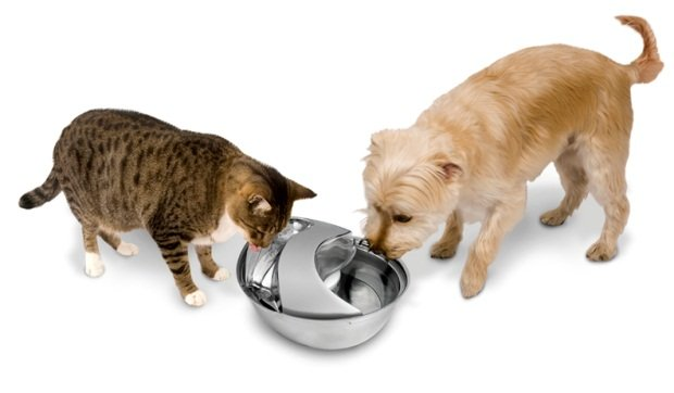 Hasil gambar untuk dog and cat drink together