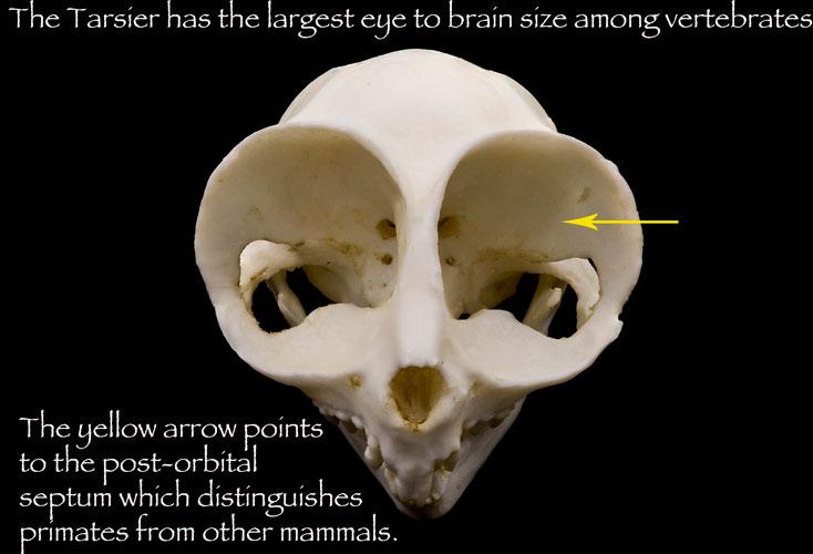 Evolution's Witness: How Eyes Evolved: 9780195369748: Medicine