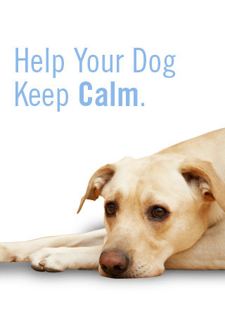 Help Your Dog Keep Calm