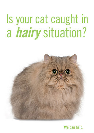 Is your cat caught in a HAIRY situation?