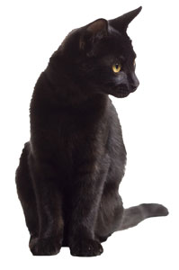 Wellness image of a black cat