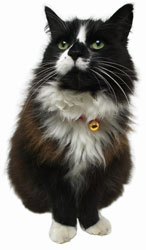 Holistic Select Image of Black and White Cat