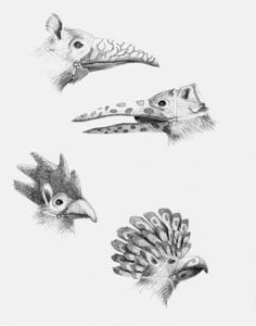 Rodents With Beaks