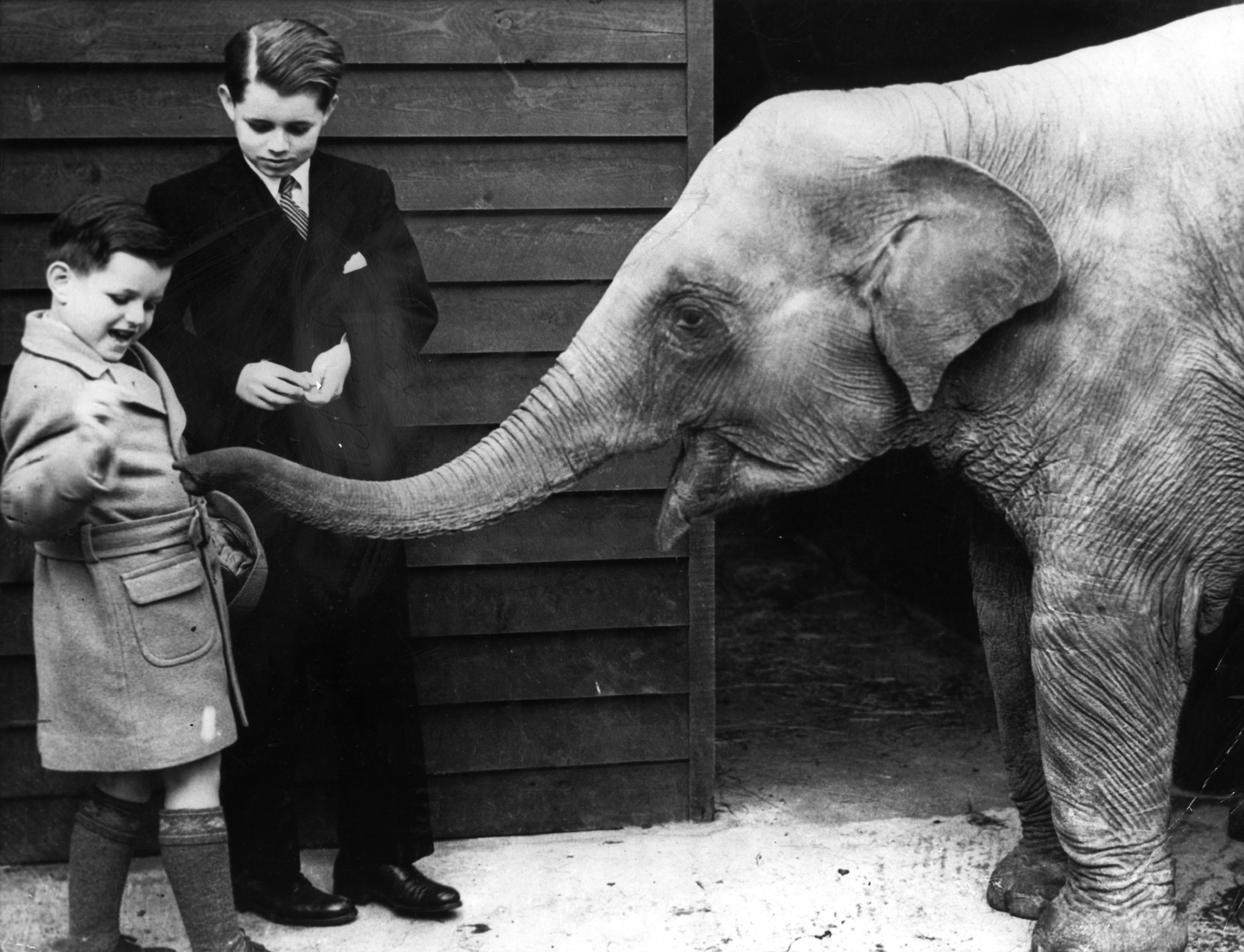 Ted Kennedy With Bobby Kennedy At The Opening Of The Royal Children's Zoo  (june 9, 1938), John F Kennedy
