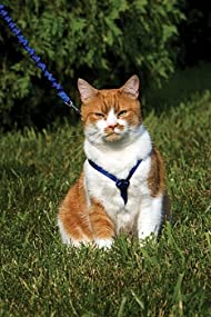how to put on a petsafe cat harness