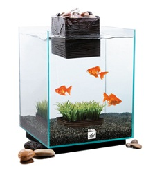 Fluval chi aquarium kit 5 gallon aquarium for Petco fish tank filters