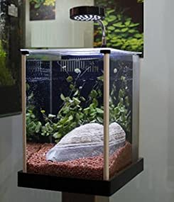 Fluval Spec Aquarium