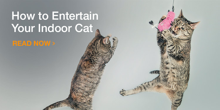 How to entertain your indoor cat