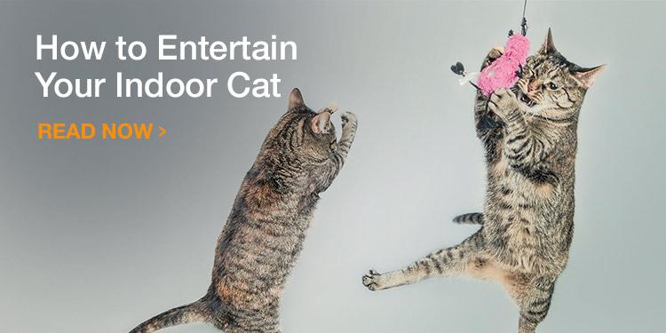 How to entertain your indoor cat