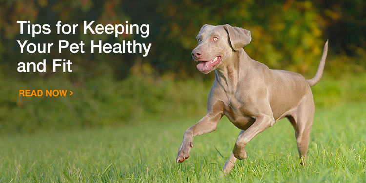 Keep Your Pet Healthy and Fit
