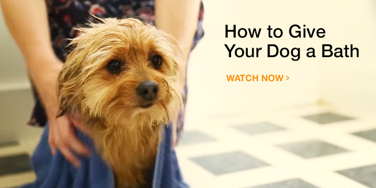 How to Bathe a Dog or Puppy