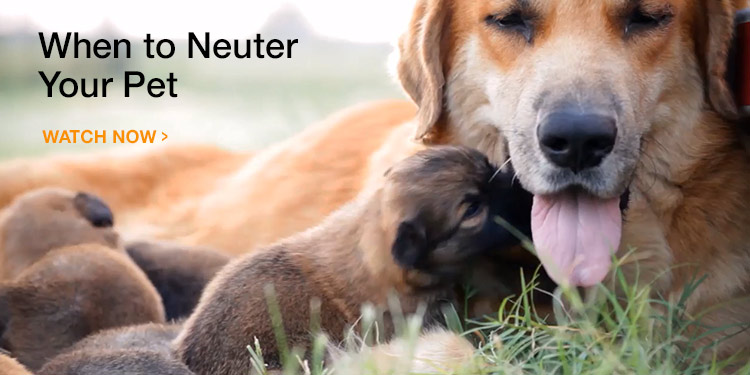 When Should You Spay or Neuter Your Dog or Cat?
