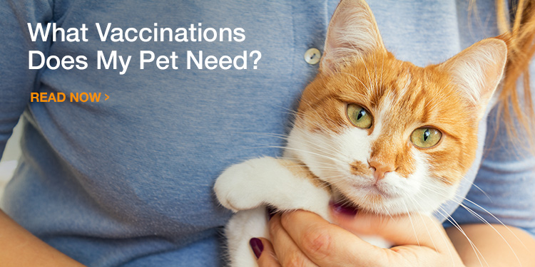 Which Vaccinations Does Your Dog or Cat Need?