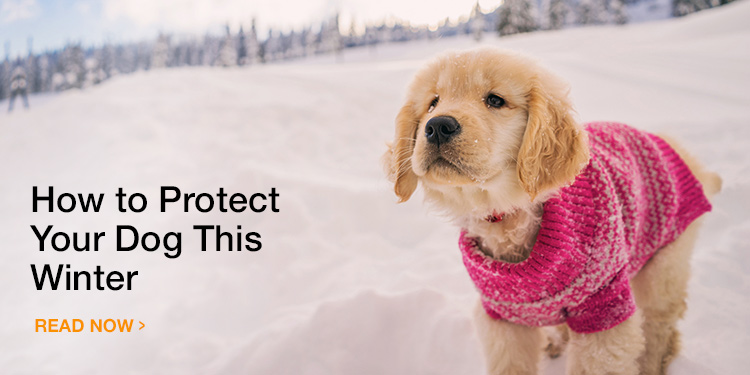 How to Protect Your Dog From the Cold Weather