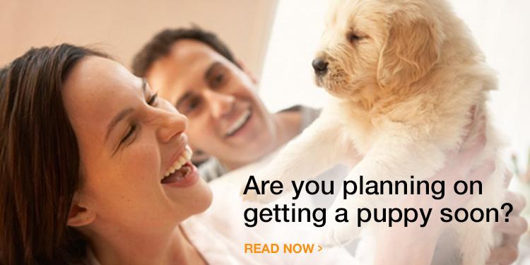 Bringing Home a New Puppy Dog - Puppy Supplies Checklist