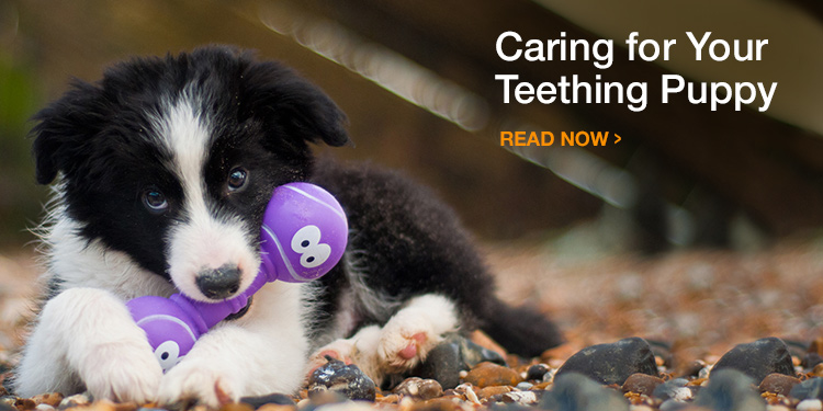Caring for Your Teething Puppy
