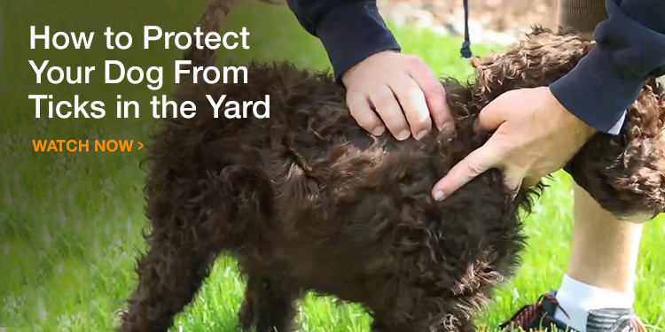 How to Protect Your Dog (and Yard) From Ticks