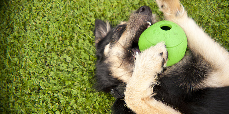 Interactive Treat-dispensing Toys Help Entertain Dogs