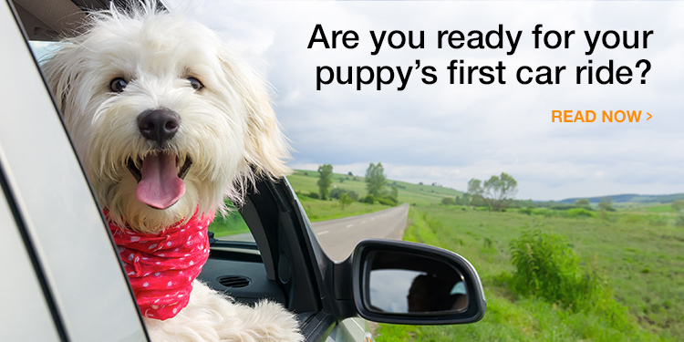 Plan Your New Puppy's First Car Ride Home