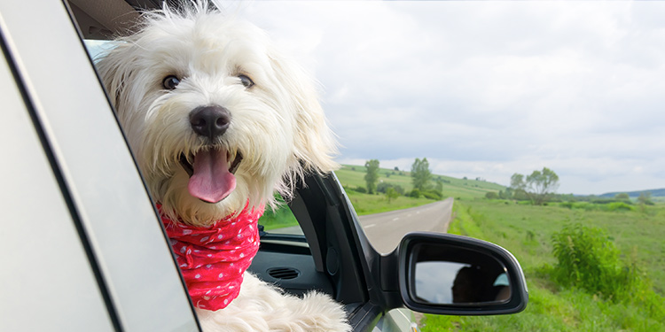 Planning for Your Puppy's Car Ride Home
