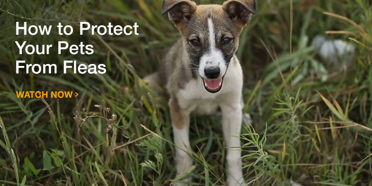 How to Protect Your Dog or Cat from Fleas