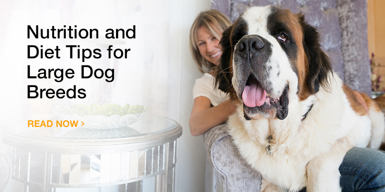 Nutrition Basics and Diet Tips for Large Dog Breeds