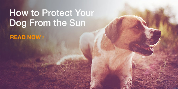 How to Protect Your Dog From the Sun