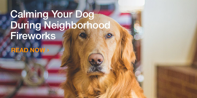Calming Your Dog During Neighborhood Fireworks