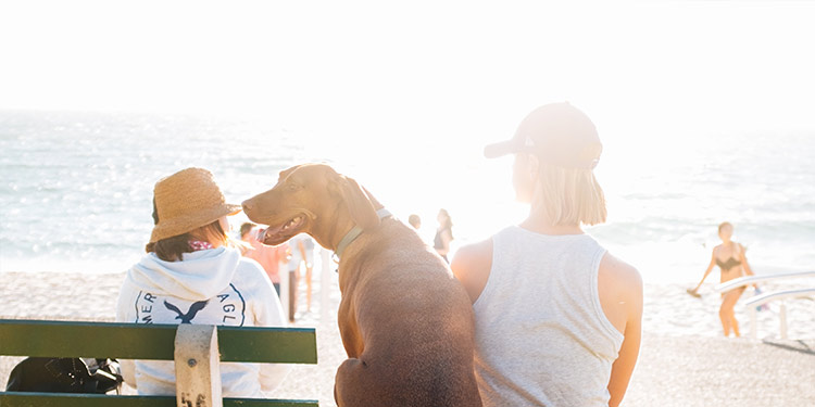 Dog Grooming Tips for the Summer