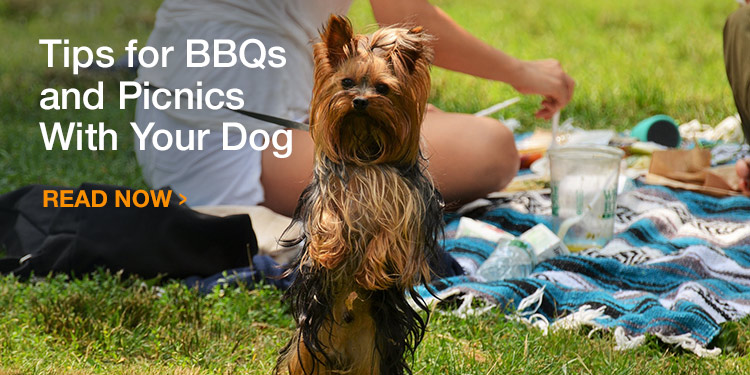 Tips for BBQs and Picnics With Your Dog
