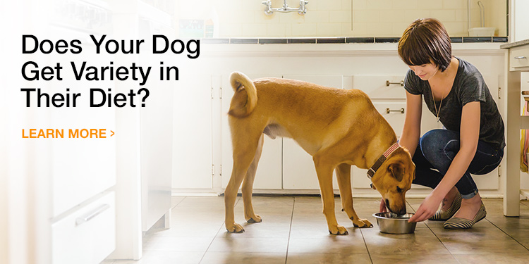 Mixing Wet and Dry Food for Dogs