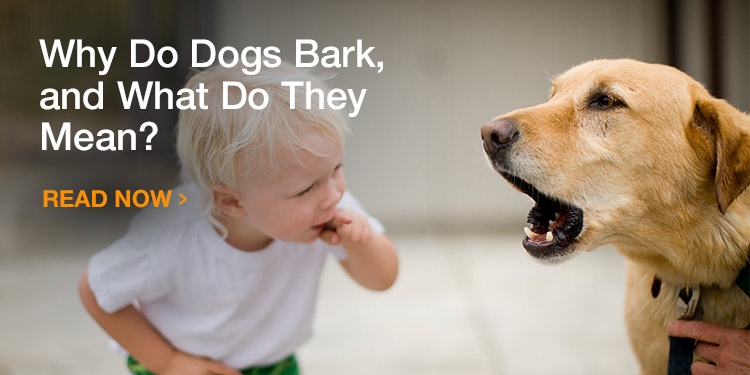 Why Do Dogs Bark, and What Do They Mean?