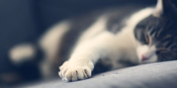 4 Tips to Help You Trim Your Cat's Nails