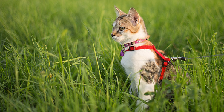 Can I Take My Cat for a Walk?