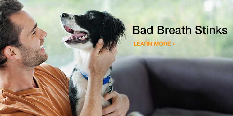 Protect Your Pet's Dental Health