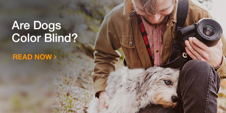 Are dogs color blind?