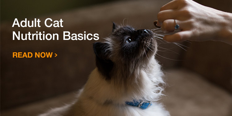 Adult Cat Nutrition Basics