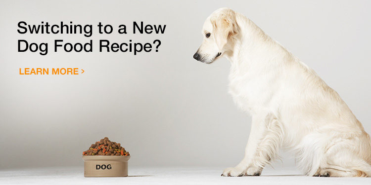 Switching your dog's food