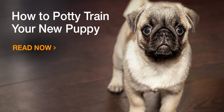 How to Potty Train/Housebreak Your New Puppy